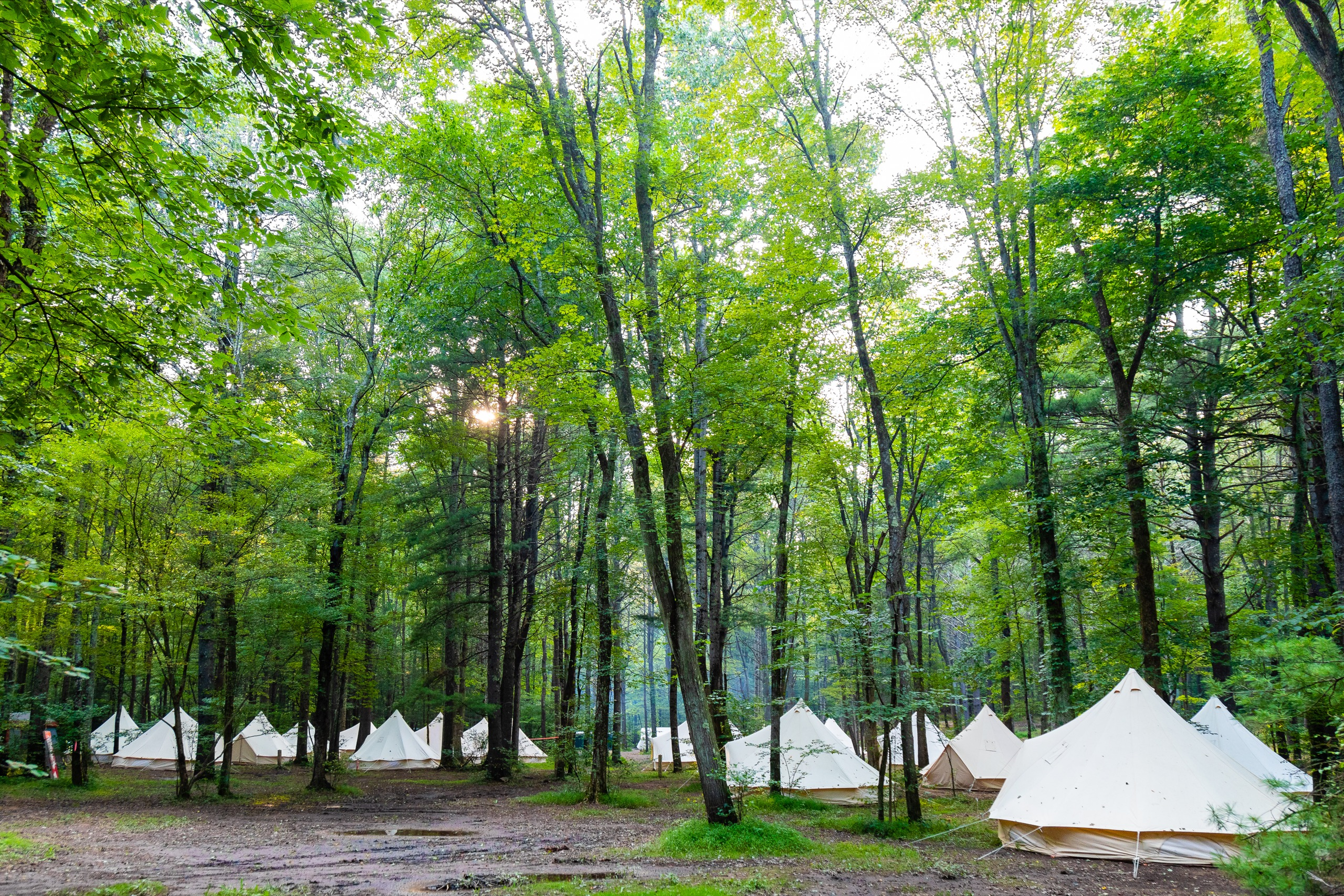 Yurts in a forest