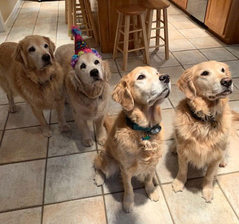 glorious goldens