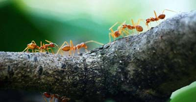 Why Are Ants So Strong?