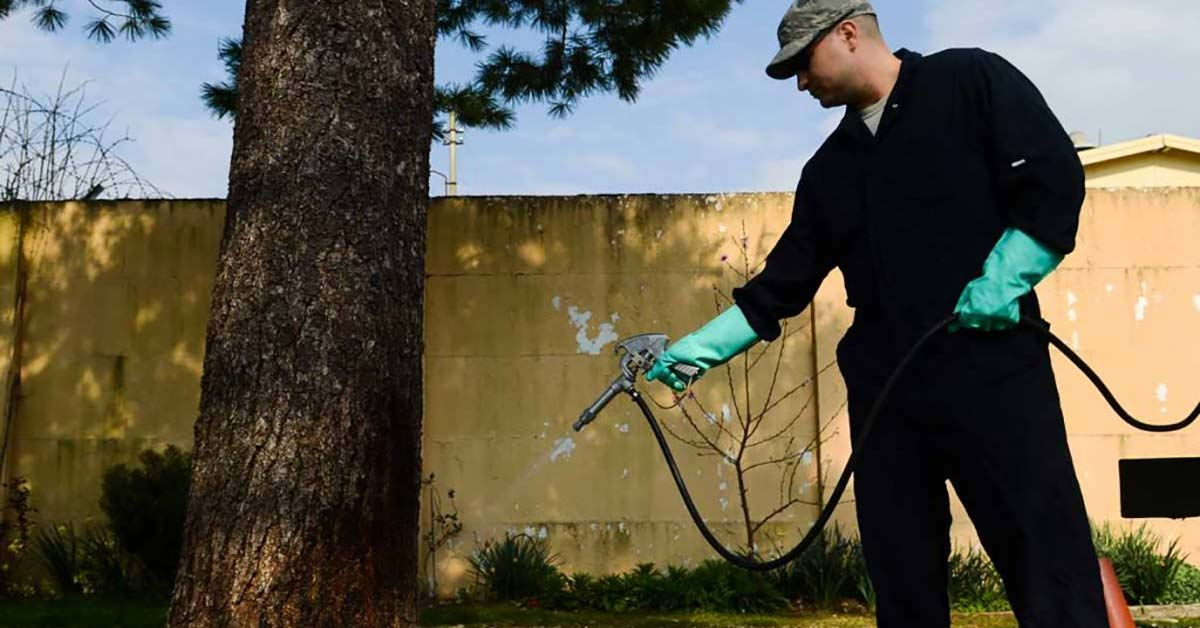 How Often Should I Do Pest Control?