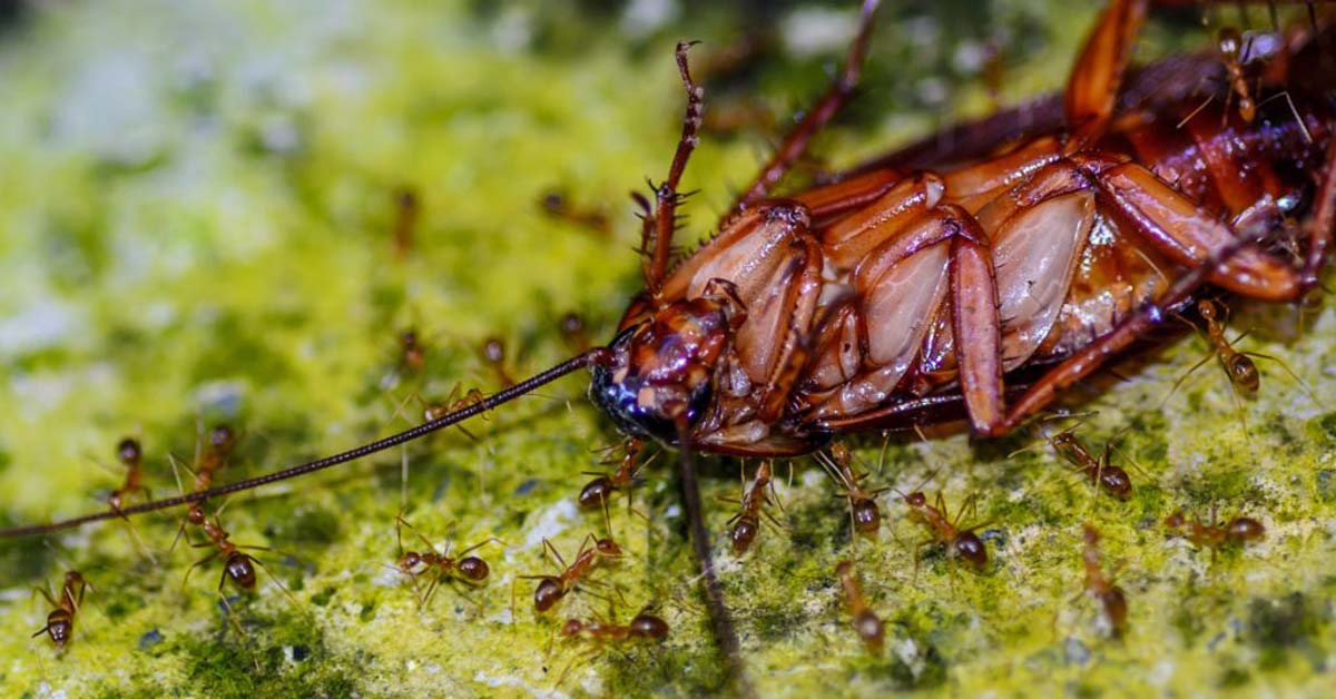 Why Are Roaches So Hard To Get Rid Of?