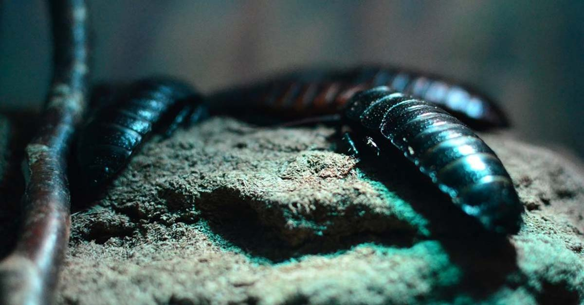 10 Best Ways to Get Rid of Roaches