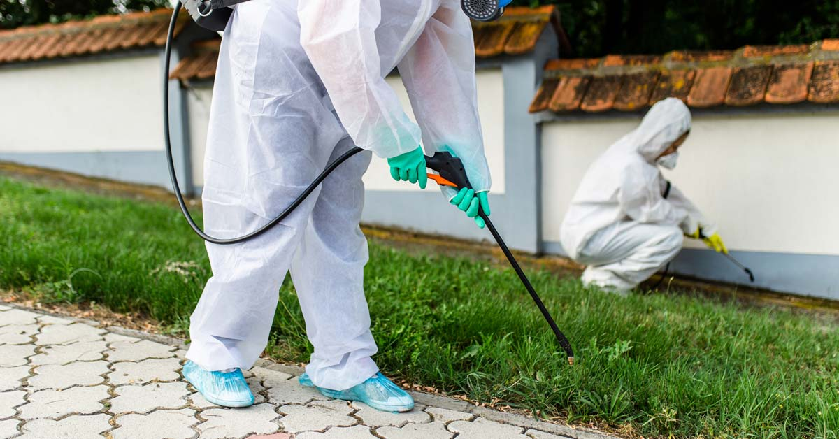 How Much Does Pest Control Cost? | Today I'm Home