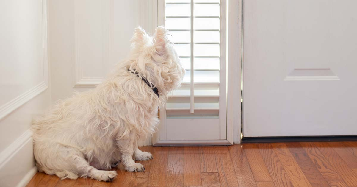 How to Stop a Dog from Chewing on Door Frames | Today I'm Home