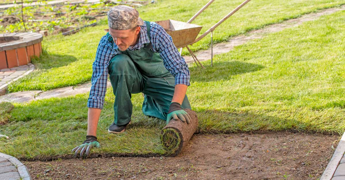 How to Plant Grass Runners | Today I'm Home