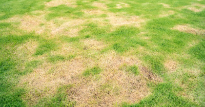 Will Watering Dead Grass Bring it Back? | Today I'm Home