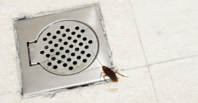 Why Are Roaches In My Bathroom? | Today I'm Home