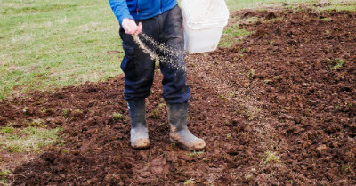 What Month Is Best To Put Grass Seed Down? | Today I'm Home