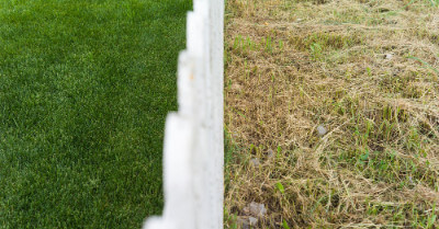 Why Is My Lawn So Thin? (Plus How To Fix It) | Today I'm Home