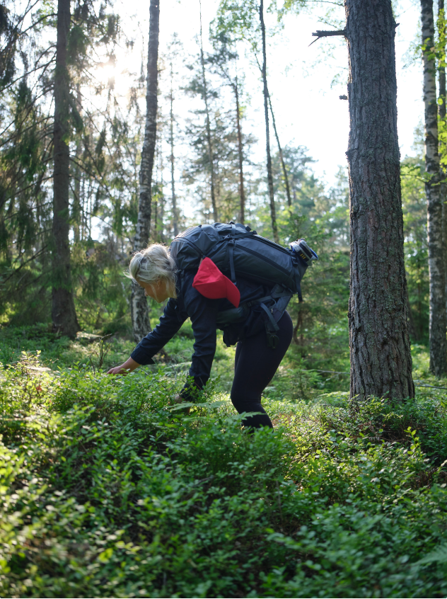 Elle picking berries in a pine forest