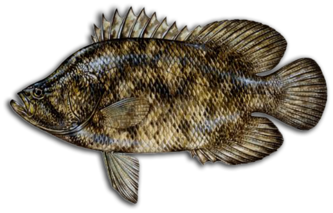tripletail icon