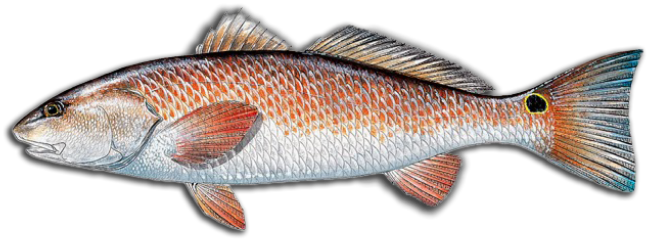 redfish icon