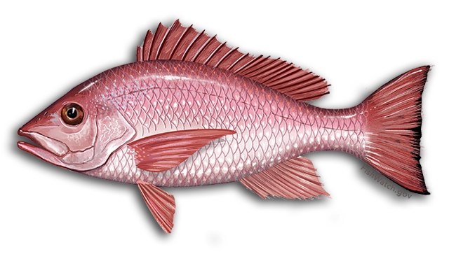 red snapper icon