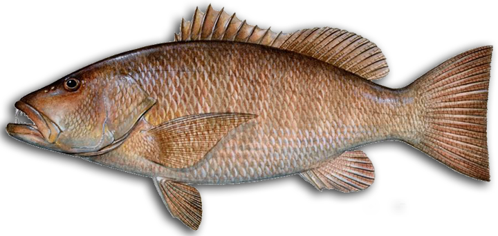 mangrove snapper icon