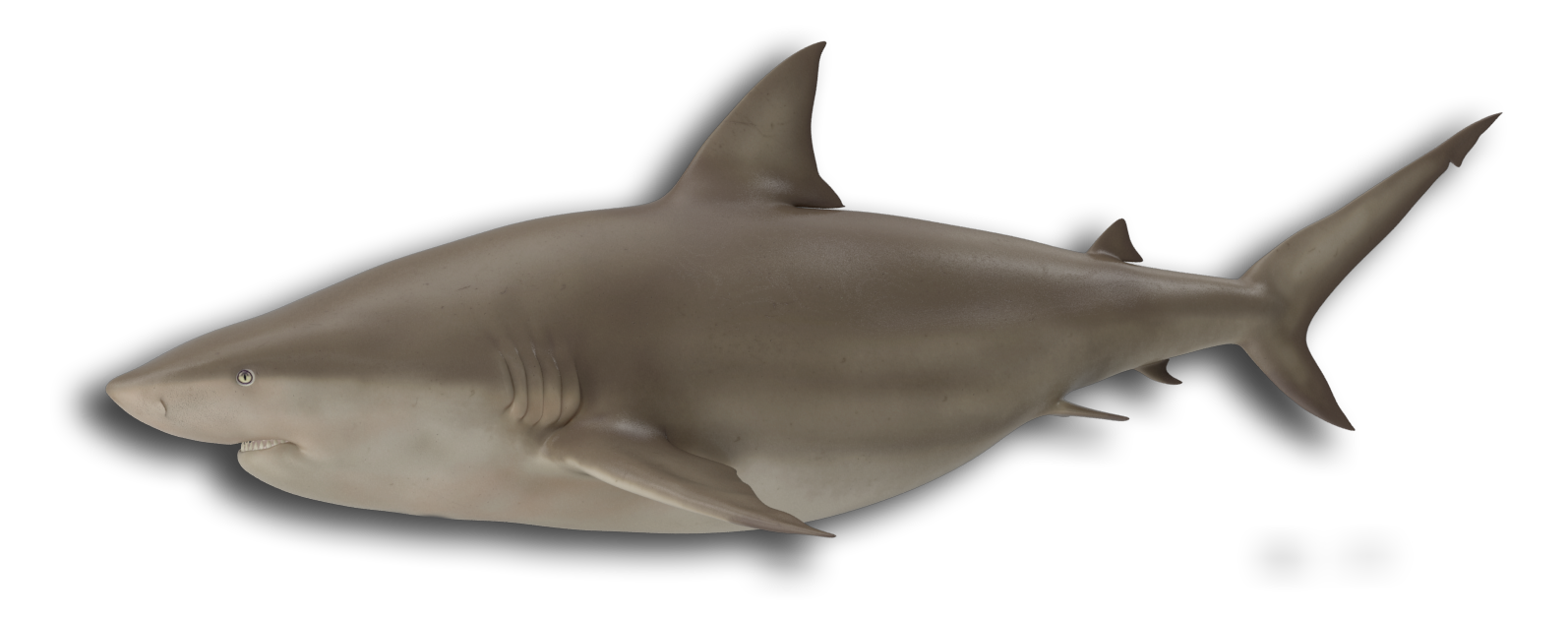 bull shark icon