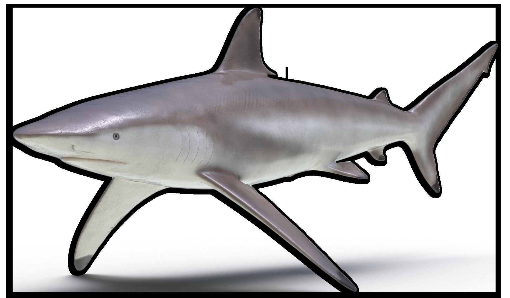 black tip shark icon
