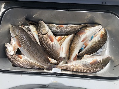 louisiana redfishing