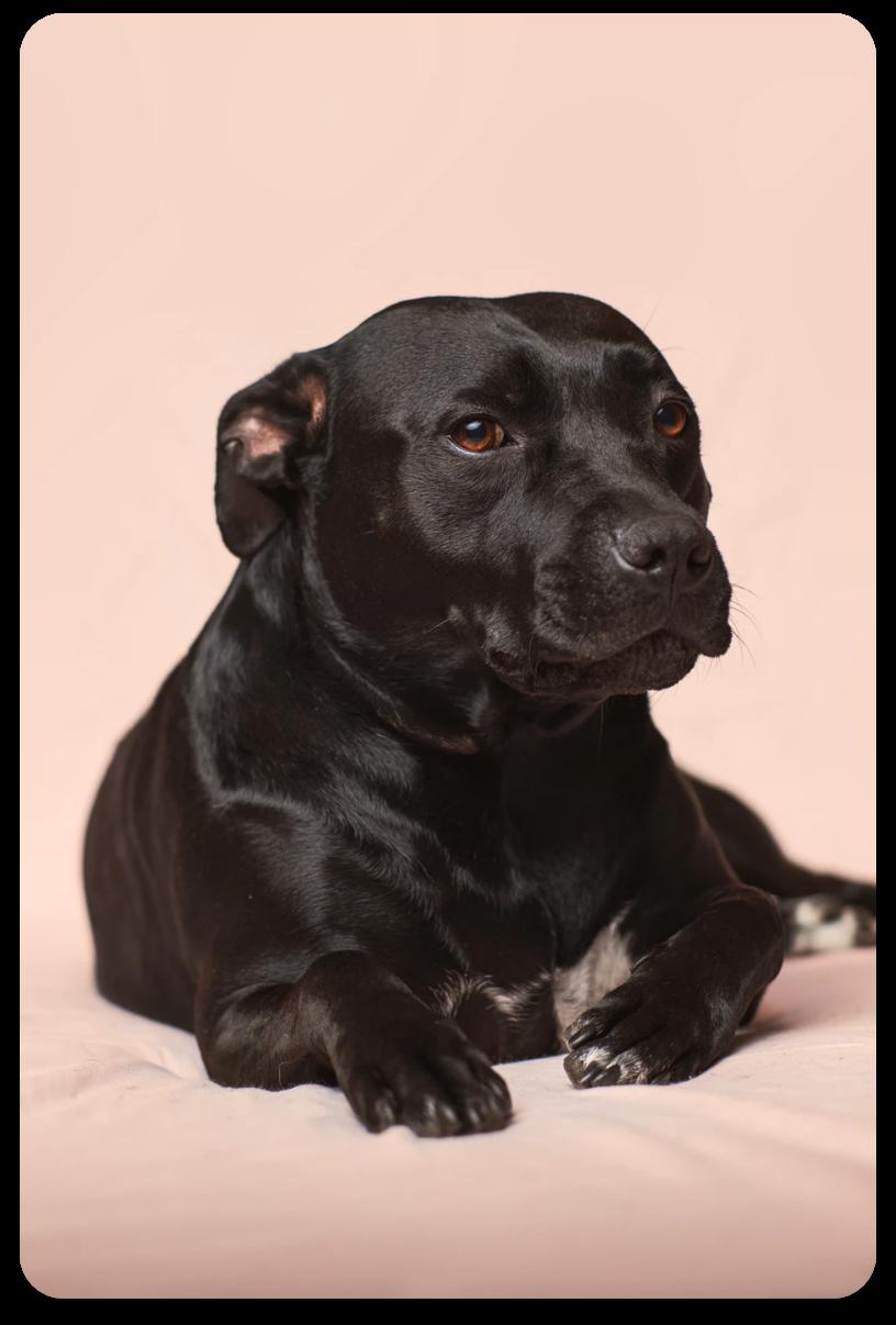 superhuman vision tags for dog image