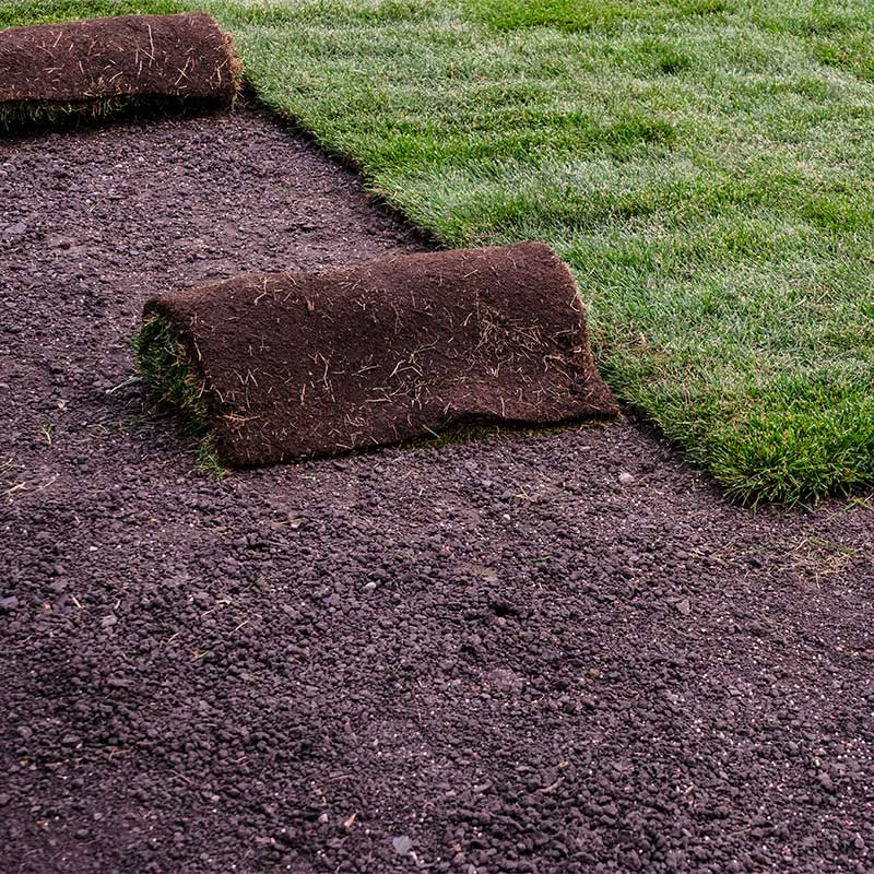 Sod installation in Austin, TX