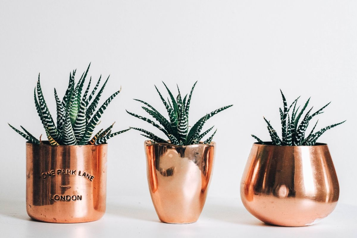 three succulents in a copper vase