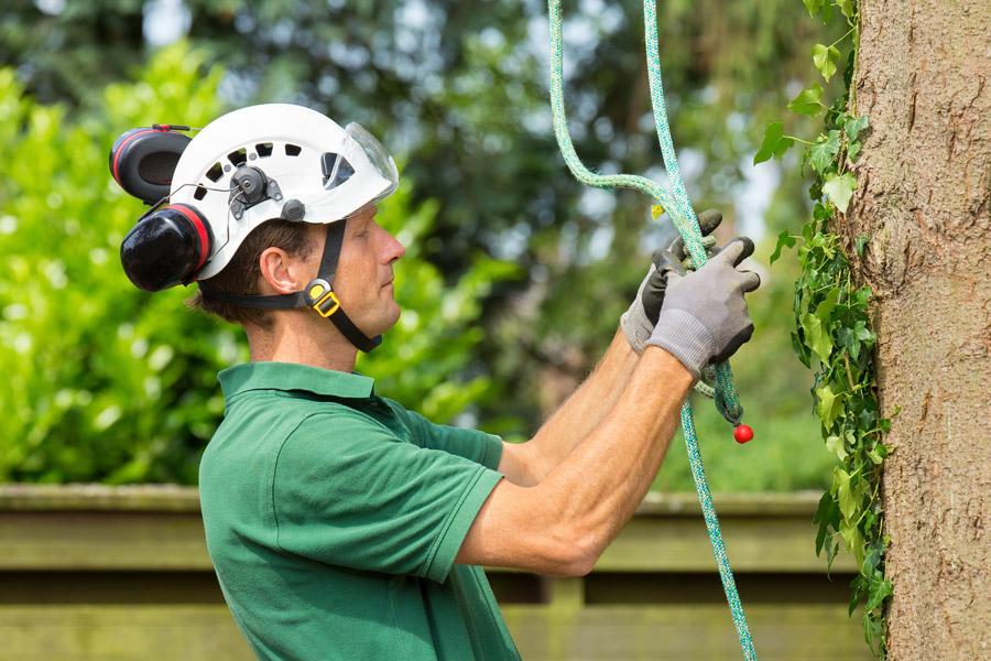 Ecology and Tree Surveys