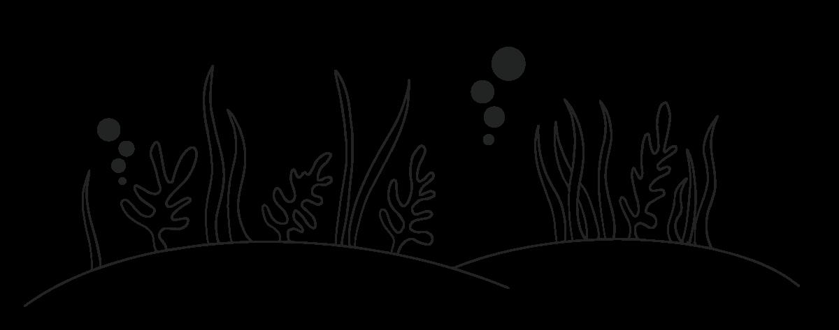 seaweed illustraion