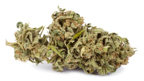 Isolated Cannabis Bud for making cannabis lube