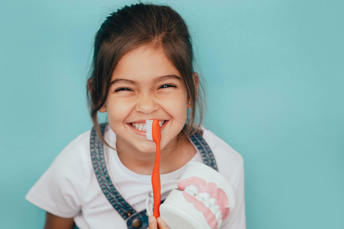 little girl holding a toothbrush and teeth model
