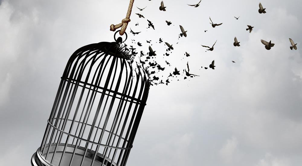 Broken birdcage with birds flying away