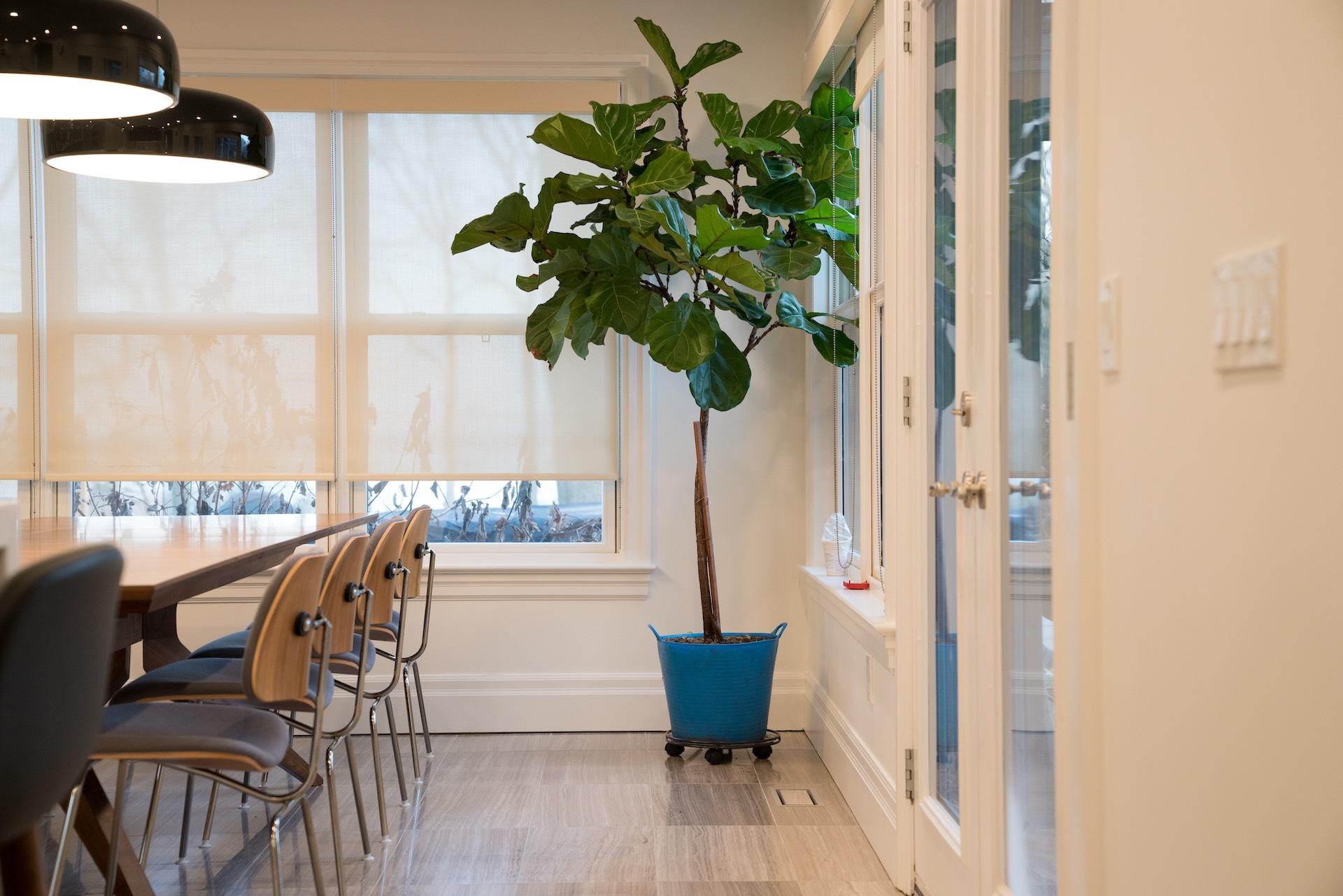 Plant in corner of kitchen