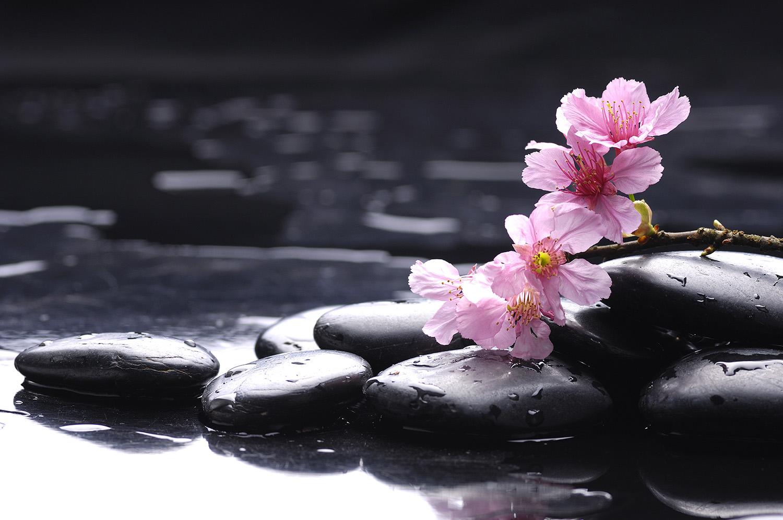 Flate stener i vann og rosa blomst