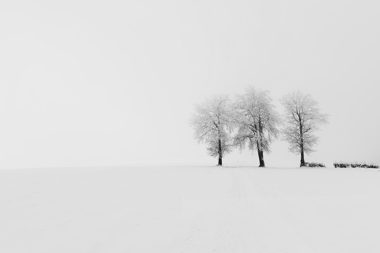 paysage d'hiver de trois arbres
