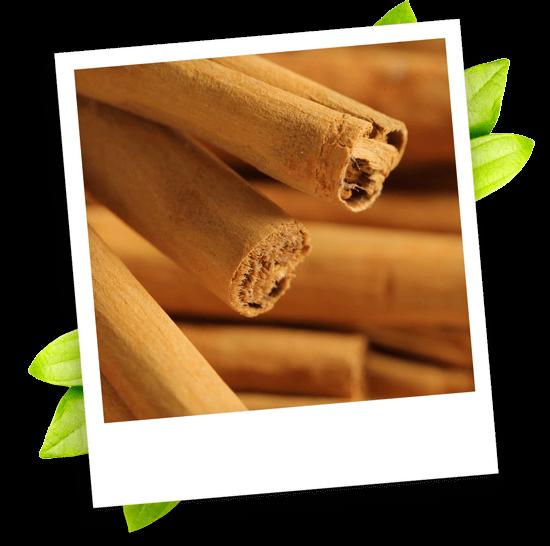 cinnamon bark oleoresin