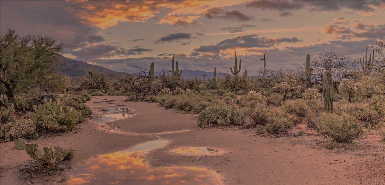 Arizona desert outside phoenix, Sonoran Desert
