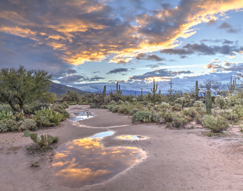 desert outside phoenix, Sonoran Desert