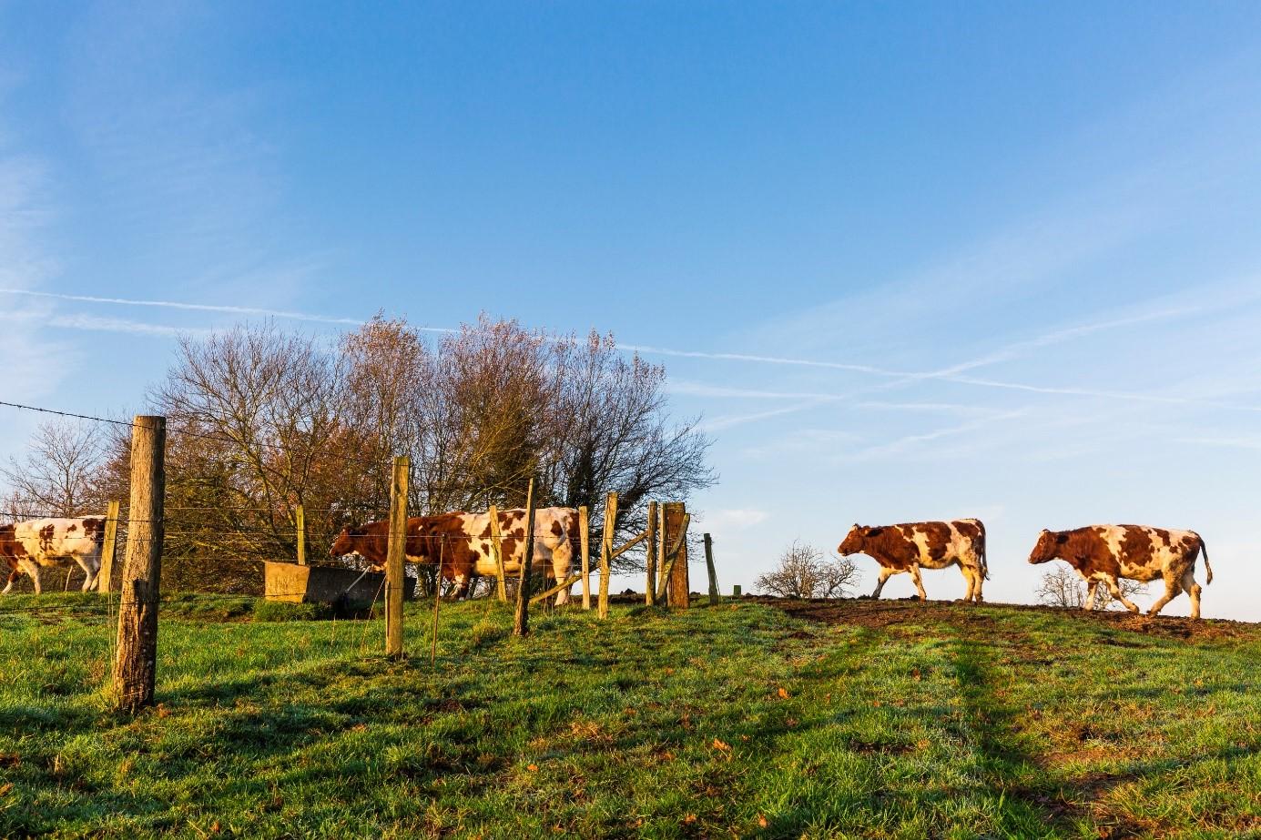© Région Pays de la Loire / A. Monié - Les beaux matins
