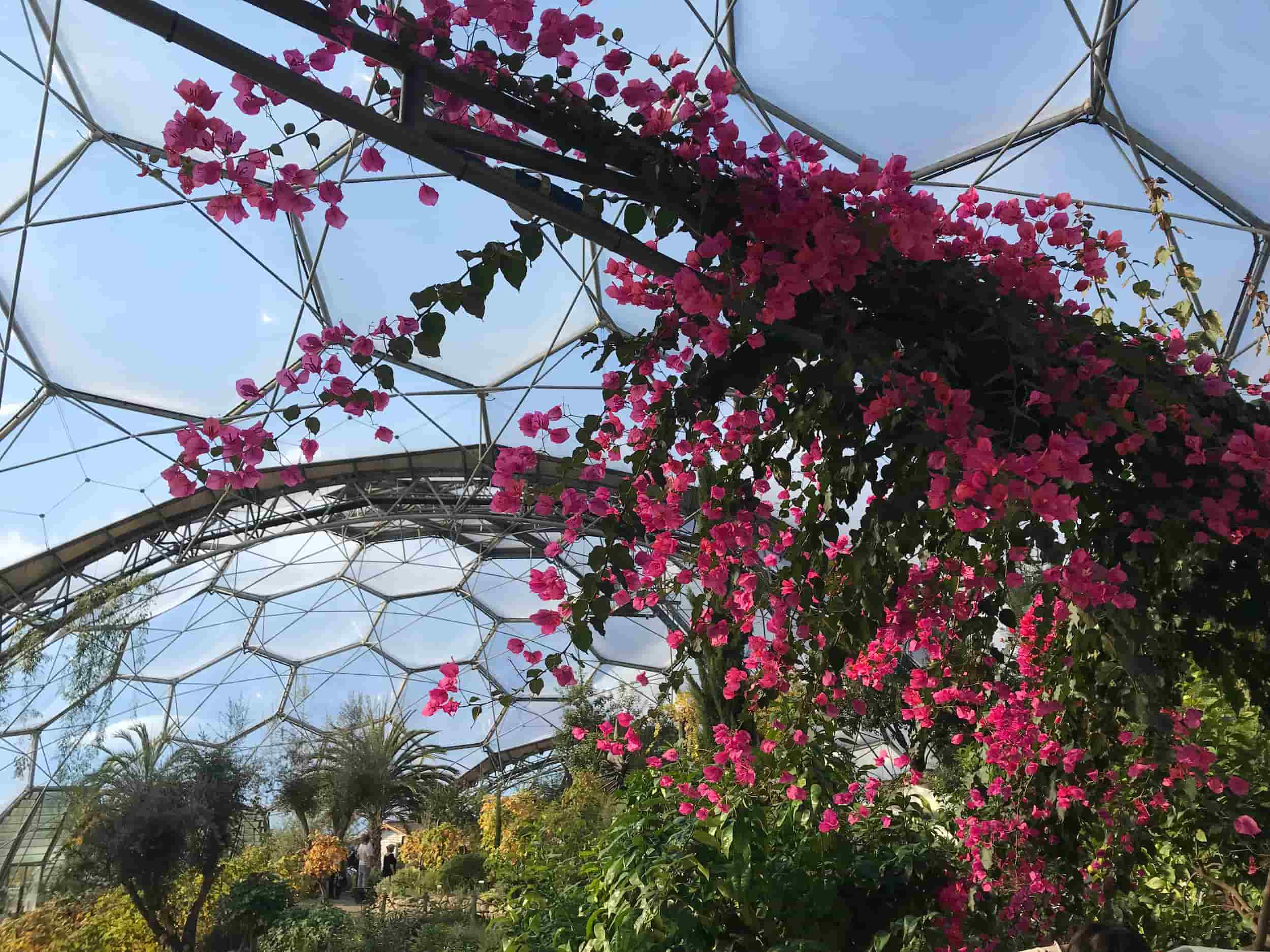 How Were the Eden Project Biomes Created?