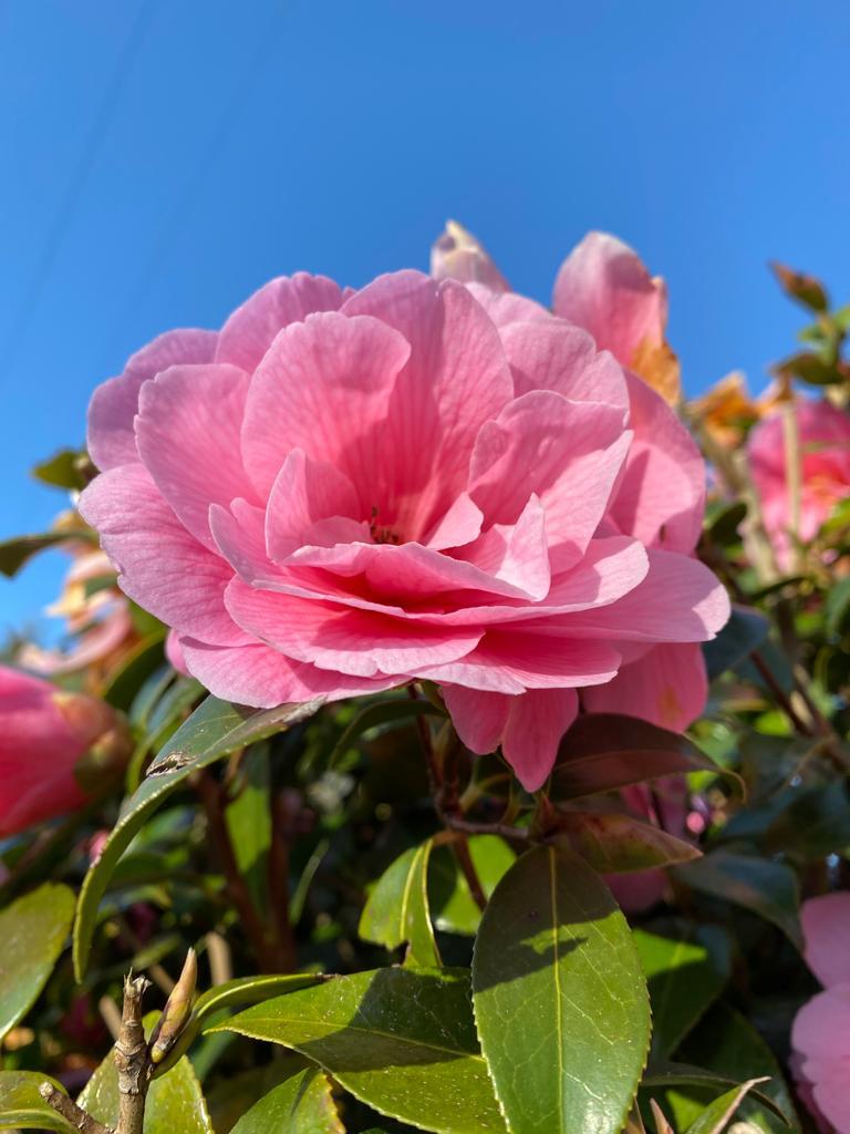Cornish Spring Gardens