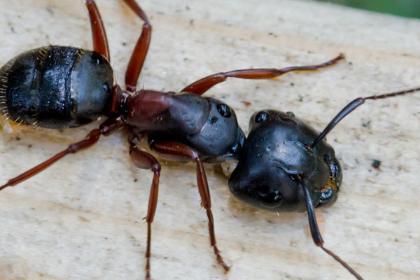 Pest Control Ashburn Loudoun Va