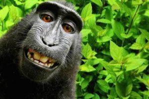 monkey-selfie-naruto