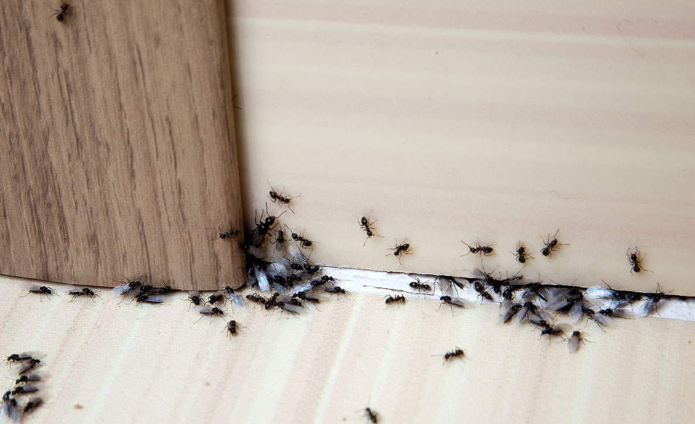 Home Pest Control in Providence, RI