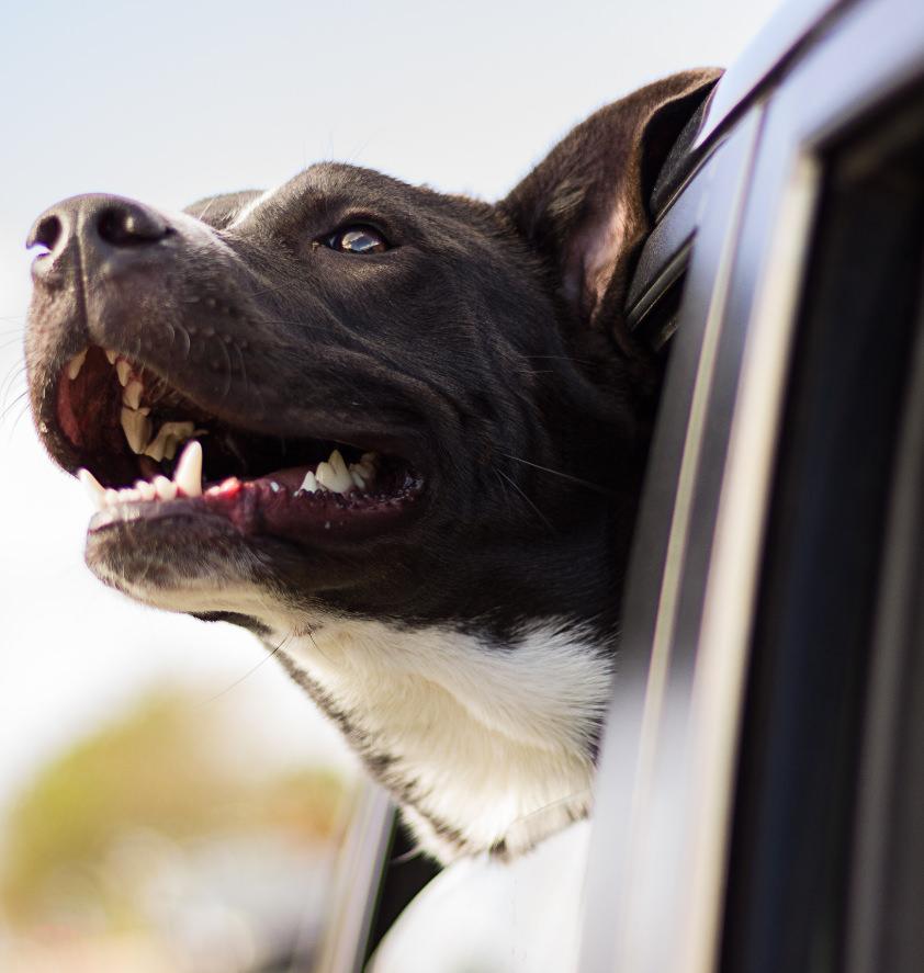 Dog taxi service Hound ville Bradford