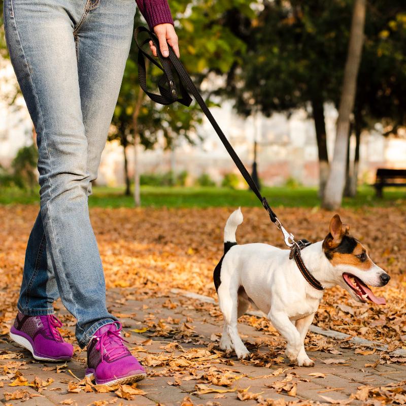 Dog walking in Bradford