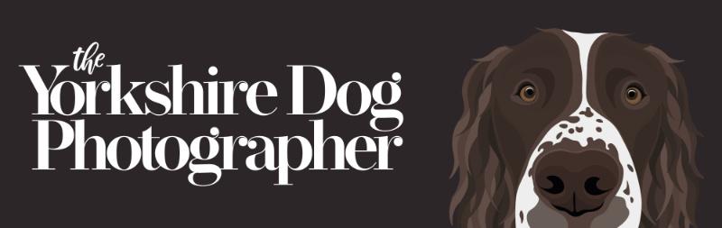 The Yorkshire Dog Photographer