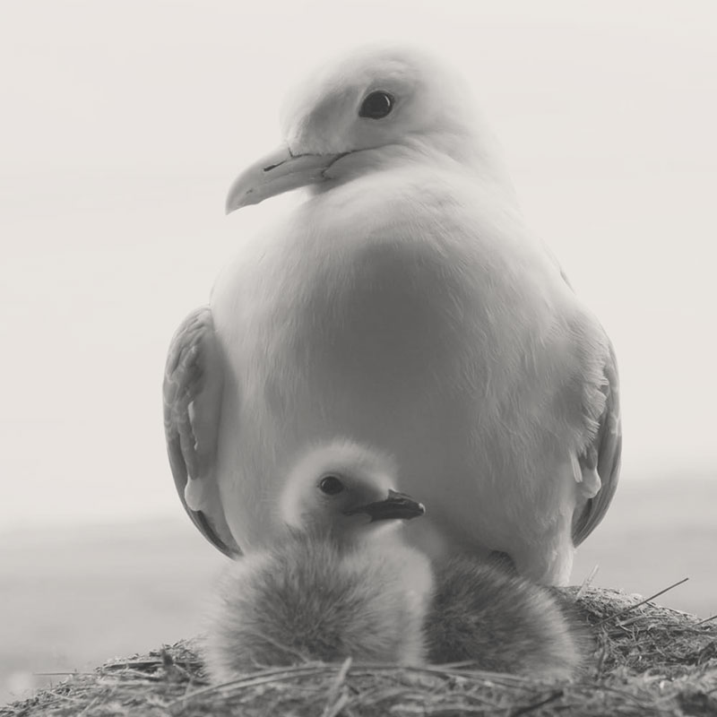 a white mommy bird with her baby from the redesign of rotating planet production website.