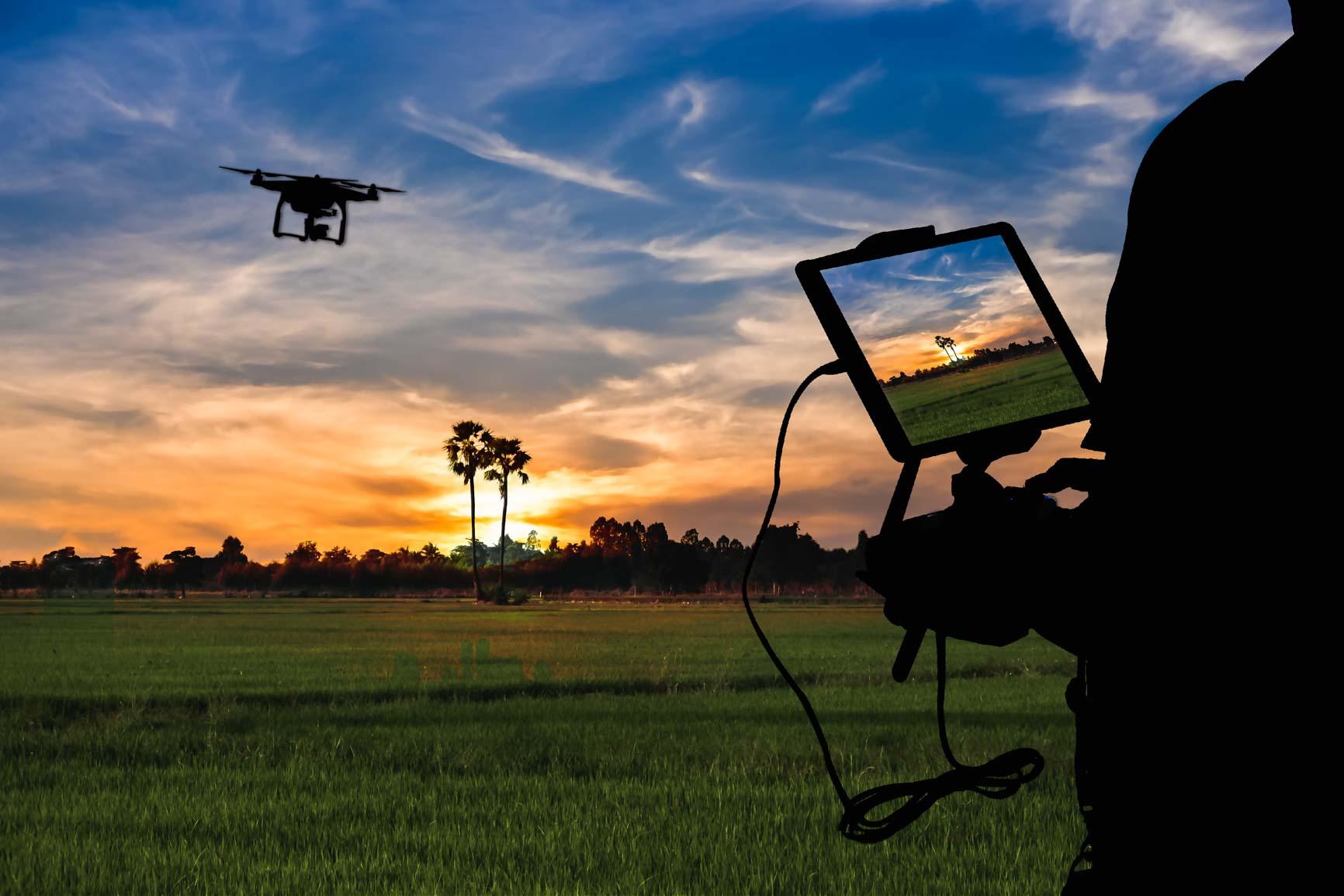 Person flying drone over hemp fields