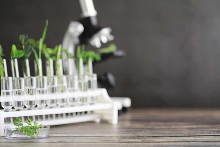 Sap Testing and Herbage Testing