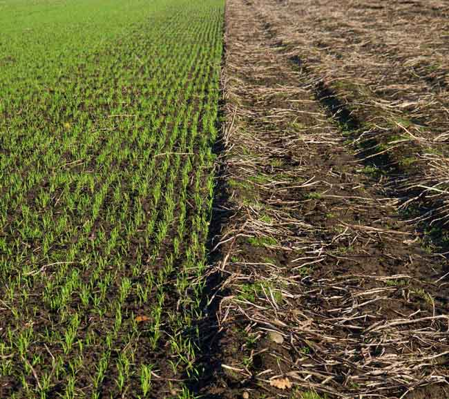 Cover Crops NZ