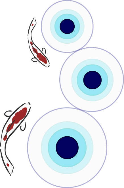 Graphic of 2 kois and three blue circles