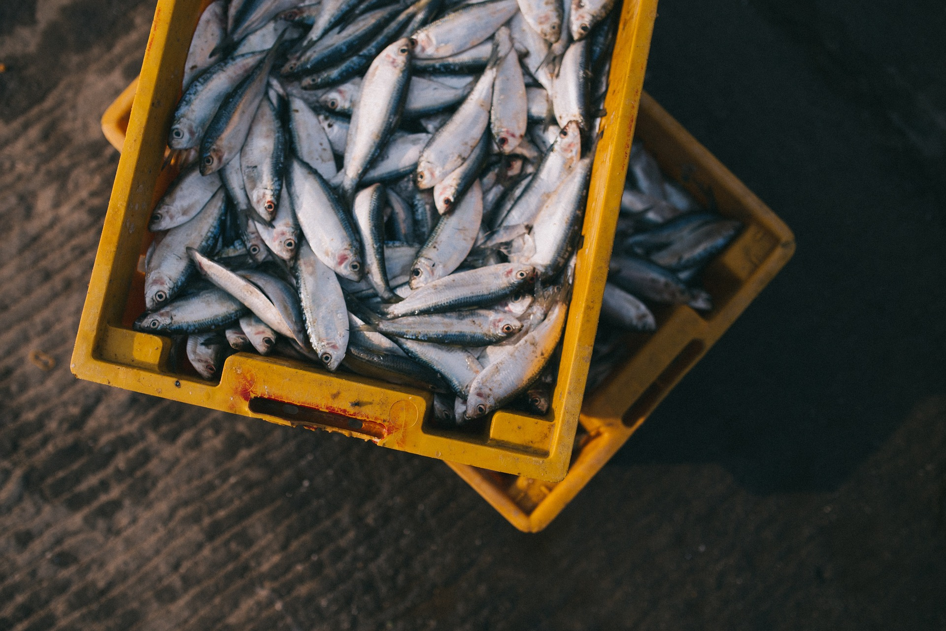 WWF Mediterranean i Blue Seeds pomažu ribarima u korištenju sredstava Europskog fonda za pomorstvo i ribarstvo